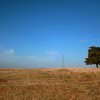A tree sits alone in a pasture off a gravel road near Highway 74 north of Oklahoma City on Tuesday, Nov. 9, 2010. Photo by John Clanton, The Oklahoman