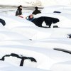 Workers at a car dealership on Route 6 in Carmel, N.Y. clean snow from the cars in their lot, Saturday, Feb. 9, 2013. The year\'s first major winter storm dumped up to 21 inches on the Lower Hudson Valley. (AP Photo/The Journal News, Frank Becerra Jr.) NYC OUT, NO SALES, ONLINE OUT, TV OUT, NEWSDAY INTERNET OUT; MAGS OUT