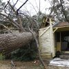 A tree blown over by a storm sits in the home of Martha Cavin in Centreville, Miss. on Wednesday, Dec. 26, 2012. According to Centreville Police Chief Jimmy Ray Reese, Cavin had to be cut out from her home. She was taken by ambulance to the hospital to treat a gash to her head. More than 25 people were injured and at least 70 homes were damaged in Mississippi by the severe storms that pushed across the South on Christmas Day, authorities said Wednesday. (AP Photo/The Enterprise-Journal, Philip Hall)