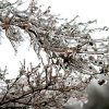 Icy Tree Branches Community Photo By: Kriea Arie Submitted By: Kriea, Norman