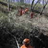 In this photo taken Wednesday Feb. 13, 2013, an inmate work crew from the Washington Ridge Conservation Camp clears brush as a fire prevention measure, near Auburn, Calif. A fire-prevention fee, unpopular with many rural property owners, is back before the state Legislature, as Gov. Jerry Brown proposes to expand its use and opponents try to kill it.(AP Photo/Rich Pedroncelli)