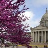 The Redbud trees are in full bloom on the grounds of the State Capitol in Oklahoma City, OK, Saturday, March 17, 2012, By Paul Hellstern, The Oklahoman