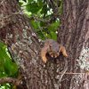 Edmond Squirrel Community Photo By: Lisa Willis Submitted By: Lisa, edmond