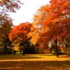The colors of Fall in Harrah seem more vibrant this year. Community Photo By: Ron Skeeters Submitted By: Ron,