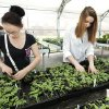 Jessica Gallegos, age 14, and Carolinia Morey, age 16, both freshmen, work Monday with bedding plants during a plant sale at Oklahoma Centennial High School in Oklahoma City. Photo by Paul B. Southerland, The Oklahoman PAUL B. SOUTHERLAND