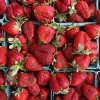 Strawberries from the Urban Agrarian are local, like all the rest of the market\'s food products. DOUG HOKE - THE OKLAHOMAN