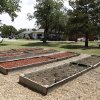 Photo -  An organic community garden at Bethel Foundation helps teach self-sufficiency and provide food for those in need. PHOTO BY DOUG HOKE, THE OKLAHOMAN  <strong>DOUG HOKE -  THE OKLAHOMAN </strong>