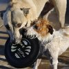 """Gibson, a """"mutt"""", left, and Petey, a Jack Russell terrier, refuse to surrender this disc after their owner, Chris Meyers threw it into the pool for them to retrieve. The Midwest City parks and recreation department opened its municipal swimming pool, Reno Swim & Slide, to pet owners and their dogs Monday afternoon, Sep. 2, 2013. The city limited the number of dogs to 150, but about 200 humans joined their canine companions for playtime in the water. Monday was the final day of the city\'s pool season and it\'s been a tradition for the past few years to invite dogs to enjoy the pool with their owners before the poll is drained for the winter. Photo by Jim Beckel, The Oklahoman. The Oklahoma Baptist University football team took to the field on the school\'s Shawnee campus for the first time in more than seven decades when they hosted the Southwestern College(Kansas) Moundbuilders at Bison Field in the Eddie Hurt Athletyic Center on Saturday, Aug. 31, 2013. The Bison team was defeated today, 26-22. Prior to the 2013 season opener, the Bison football team played their last game in 1940. Photo by Jim Beckel, The Oklahoman."""