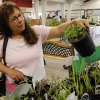 Annie Potts looks for plants and vegetables at the Farmer\'s Market at the Cleveland County Fairgrounds on Wednesday, April 17, 2013 in Norman, Okla. Photo by Steve Sisney, The Oklahoman