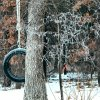 Tire Swing in the Ice Hidden Lake Edmond Community Photo By: Nick Webster Submitted By: Nick, Edmond