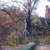 Damage to an old tree at the University of Oklahoma Community Photo By: Daniel Wolter Submitted By: Daniel, Norman