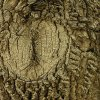 Dragon eye, tree bark pattern Community Photo By: Carl Griffin Submitted By: carl, edmond