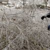 WINTER / COLD / WEATHER / ICE STORM / DAMAGE / AFTERMATH / CLEAN UP / CLEANUP: Bill Baker clears a downed tree limb out of his yard during a winter storm, in Perkins, Okla., Monday, December 10, 2007. By Matt Strasen, The Oklahoman ORG XMIT: KOD