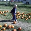 Eden Dickerson, searches for the perfect pumpkin, while attending a Providence Hall school field trip to Chester\'s Pumpkin Patch. Community Photo By: Lisa Dickerson Submitted By: Lisa, Edmond