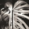 """Photo -  Photographer Brett Weston's 1981 work """"Untitled [leaves, Hawaii]"""" is featured in the new exhibit """"Brett Weston: Land, Sea and Sky — Recent Gifts from the Christian K. Keesee Collection,"""" opening Saturday at the Oklahoma City Museum of Art. Photo provided by the Brett Weston Archive"""