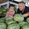 Les Powell gets some help from granddaughter Chloe Harris in selecting the right watermelon from a bin in Joel Tumblson\'s roadside stand on US 81. Watermelon farmers are busy harvesting melons in preparation for the annual watermelon festival in Rush Springs on Aug. 10, 2013. Photo taken Wednesday, July 24, 2013. Photo by Jim Beckel, The Oklahoman.