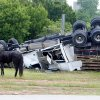 A semi hauling a stock trailer loaded with horses overturned westbound on the Turner Turnpike at the I-35 exit in Oklahoma City early Tuesday morning, May 18, 2010. The driver fell asleep. Photo by Paul B. Southerland, The Oklahoman
