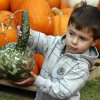 Zion Farkas, 2, shows his interest in a gourd at the Pumpkin Patch at McFarlin United Methodist Church in Norman, Oklahoma on Tuesday October 7, 2008. BY STEVE SISNEY, THE OKLAHOMAN