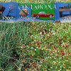 (Collage) The mural is on the side of a business in Hinton, Oklahoma, along with some roadside flowers in the area. Community Photo By: Eldon Harris Submitted By: Eldon, Bethany