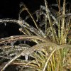 Captured in mid-air. Frozen wild grasses. Community Photo By: Kelly File Submitted By: Kelly, Edmond