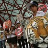Photo - Thai activists hold posters urging people to stop the trading of tigers during the Convention on International Trade in Endangered Species, or CITES,  in Bangkok Sunday, March 3, 2013. How to slow the slaughter and curb the trade in
