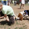 Photo -  Malek Meyers, 7, and his dog, Duke, pick up a handful of Easter eggs at the annual Edmond Hound Hunt held at the Edmond Dog Park. PHOTO BY K.T. KING, THE OKLAHOMAN   KT King -