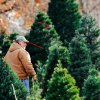 John Knight walks Thursday among trees waiting to be cut at his business, Sorghum Mill Tree Farm, 7121 Midwest Lane, Edmond. Photo by Jim Beckel, The Oklahoman
