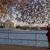 Photo - Visitors to the Tidal Basin view the cherry blossom trees as they begin to bloom, on Wednesday, April 9, 2014, in Washington. (AP Photo/ Evan Vucci)