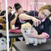 Photo -  Student groomers Karrie McKinney, Karen Matthews, and Kristi Dobbs spruce up the pooches during makeover sessions. Photos provided by Tom Fields.  <strong>Tom Fields</strong>