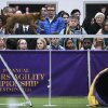 Spectators watch as Jimmy, a mixed breed, runs the dog-walk during the Masters Agility Championship at Westminster held at Pier 94, Saturday, Feb. 8, 2014, in New York. The competition marks the first time mixed-breed dogs have appeared at Westminster since early in the show\'s 138 years. (AP Photo/John Minchillo)