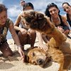 Photo - In this 2010 photo provided by Explore.org, people pet Lucky, philanthropist Charlie Annenberg's golden retriever, at the Pipeline Beach in Ehukai Beach Park, Haleiwa, Hawaii. For 16 years, Lucky has been his sidekick, soul mate and inspiration, said Annenberg. In 2010, Annenberg started Dog Bless You, a journal of their travels as told by Lucky but written by Annenberg. (AP Photo/Explore.org)