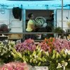 In this Sept. 3, 2013 photo, a vendor unloads a bouquet of flowers from her Volkswagen van, at a street market in Sao Paulo, Brazil. In Brazil the VW van is known as the