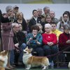 Spectators watch the Pembroke Welsh Corgi competition during the Westminster Kennel Club dog show, Monday, Feb. 10, 2014, in New York. (AP Photo/John Minchillo)
