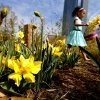A child carries a basket past flowers during the Myriad Gardens Annual Easter Egg Hunt in downtown Oklahoma City, Saturday, March 30, 2013. Photo by Bryan Terry, The Oklahoman
