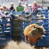 HONORABLE MENTION-SPORTS Landon Parrish, from Kayenta, AZ, holds on the shoot rail as the bull he was trying to ride gets out of the gate early at the International Finals Youth Rodeo in Shawnee, Wednesday, July 15 , 2009. Photo By David McDaniel, The Oklahoman.