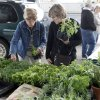 Marguerite Holloway (left) and Pam Berryman search for herbs during the opening day of the Edmond Farmers Market in Edmond, OK, Saturday, April 17, 2010. By Paul Hellstern, The Oklahoman