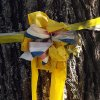 Photo - A yellow ribbon is tied to a tree outside the family home of freelance journalist James Foley, Wednesday, Aug. 20, 2014 in Rochester, N.H. Foley was abducted in November 2012 while covering the Syrian conflict. On Tuesday, Aug. 19, militants with the Islamic State extremist group released a video showing Islamic State militants beheading Foley in an act of revenge for U.S. airstrikes in northern Iraq . (AP Photo/Jim Cole)