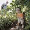 Caleb Sterling, 2, exits an arbour of bean plants in the children\'s section of the Cleveland County Master Gardeners demonstration garden as 2- to 7-year-old kids participate in Little Sprouts Day Out, a food education program from the OSU Extension Office and the Healthy Community Coalition on Saturday, July 17, 2010, in Norman, Okla. Photo by Steve Sisney, The Oklahoman
