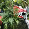 Kenton Peters, horticulturist, placing a claw for a dragon above the waterfall in a ConservaStory display at the Myriad Botanical Gardens Crystal Bridge Tropical Conservatory in downtown Oklahoma City Friday, June 5, 2009. ConservaStory opens Saturday. Photo by Paul B. Southerland, The Oklahoman