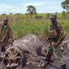 Photo - In this photo taken on Tuesday, May 13, 2014, Park ranges stand next to the remains of elephants that were killed by poachers in the Garamba National Park, situated in the Democratic Republic of Congo. At least 68 elephants, some 4 percent of the population of one of Africa's oldest parks, have been slaughtered by poachers over the last two months using chain saws and helicopters, warned the non-profit group managing the park. The Johannesburg-based African Parks group said that since mid-May, the 5,000 square kilometer (1,900 square mile) Garamba National Park established in 1938 has faced an onslaught from several different bands of poachers. (AP Photo/African Parks)