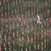 A man walks among nearly 3,000 flags set up as part of a remembrance on 10th anniversary of the Sept. 11 terrorist attacks Sunday, Sept. 11, 2011, in St. Louis. (AP Photo/Jeff Roberson)