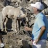 Photo - Stewart Cink walks off the 15th green as a bighorn sheep looks on during the pro-am portion of the Humana Challenge golf tournament on the Palmer Private course at PGA West on Wednesday, Jan. 15, 2014, in La Quinta, Calif. (AP Photo/Chris Carlson)