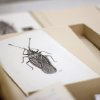Photo - This photo taken June 5, 2014 shows diagrams in a room where the Drake bug collection is held at the Smithsonian Natural History Museum in Washington. When Dr. Carl J. Drake died in 1965 he left the Smithsonian's National Museum of Natural History $250,000 and his collection of thousands of bugs. Drake, an entomologist, spent his life studying insects, and he gave the Smithsonian a mission for his money: buy more bugs. After nearly half a century, however, the Smithsonian is having a hard time following the directives of Drake's will. (AP Photo/Connor Radnovich)