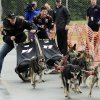 Photo -   Iditarod and Yukon Quest champion Dallas Seavey slides his dog team past Denny Hamlin at the FedEx Express Hub in Anchorage, Alaska, Monday, June 25, 2012. Hamlin visited with some of the 1,350 FedEx team members at the Anchorage hub before learning about the sport of dog mushing before competing in a best-of-3 race in the parking lot. Hamlin won the first race and Seavey won the next two races. (AP Photo/The Anchorage Daily News, Bill Roth)
