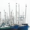 Photo - Shrimp boats float beside docks in Bayou La Batre, Ala., in this file photo from May 3, 2010. The seafood village made famous by the movie
