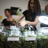 Photo - FILE - In this April 20, 2013 file photo, employees of The Healing Leaf collective in Lake Stevens show some of their product during