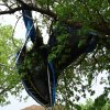 Trampoline in tree Community Photo By: Melissa Bastianelli Submitted By: Melissa, Oklahoma City