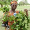 Photo - Fatou Batta, Groundswell International's national partner in her native Burkina Faso in West Africa, displays the nutritious leaves of the Moringa tree. PHOTO PROVIDED BY GROUNDSWELL INTERNATIONAL <strong></strong>