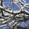 Ice covered branches on a sunny day. Digitally altered. Community Photo By: Caleb Burnett Submitted By: Cheryl, Stratford