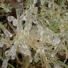 December 9th Ice Storm hits blades of grass Community Photo By: Marcy L. Submitted By: Marcy, Oklahoma City